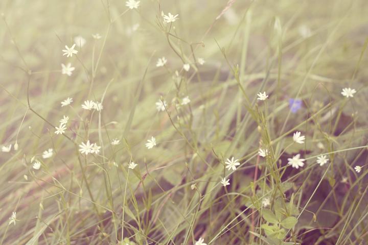 Sunlit Grasses