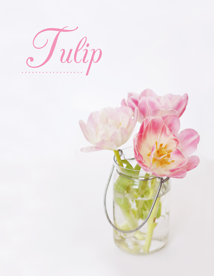 Pink Tulip | City of Blackbirds Photography