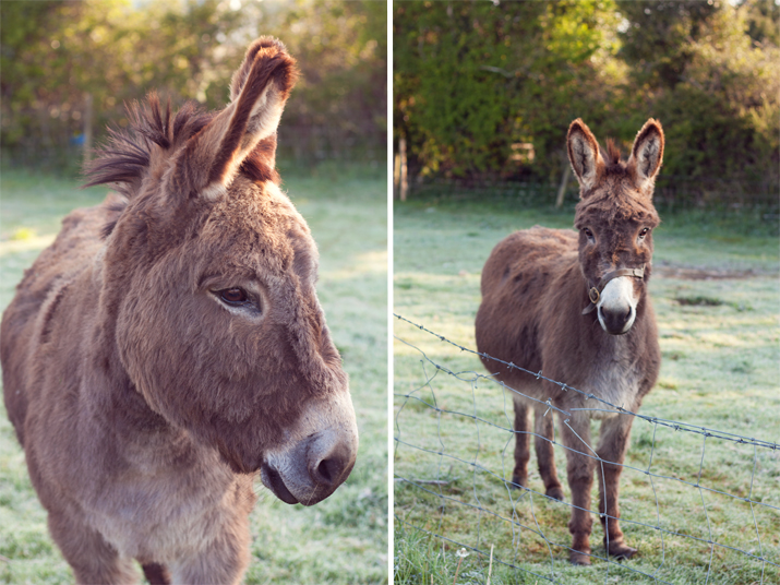 Donkeys | City of Blackbirds Photography