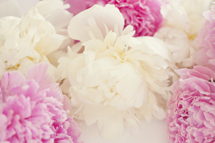 Pink & White Peonies | City of Blackbirds Photography