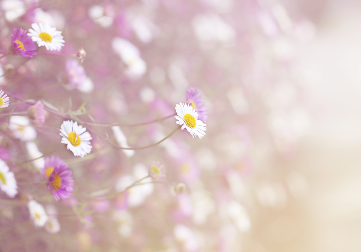 Daisies &amp; Light | City of Blackbirds Photography