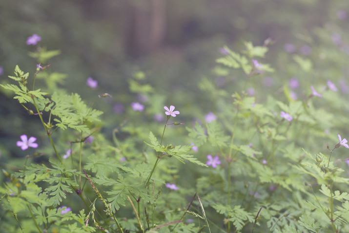 Purple Woodland Flowers | City of Blackbirds Photography
