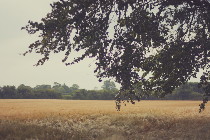 Irish Summer 2012 | City of Blackbirds Photography