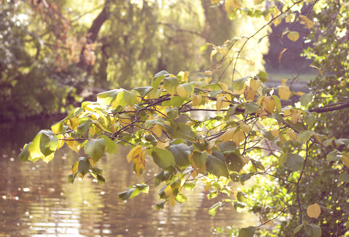 A Touch of Autumn in Dublin | St Stephen's Green | City of Blackbirds Photography