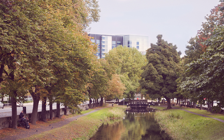 A Touch of Autumn in Dublin | The Grand Canal | City of Blackbirds Photography