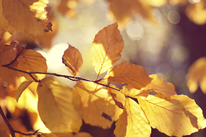 Autumn in Ireland | Light on the Leaves | City of Blackbirds Photography