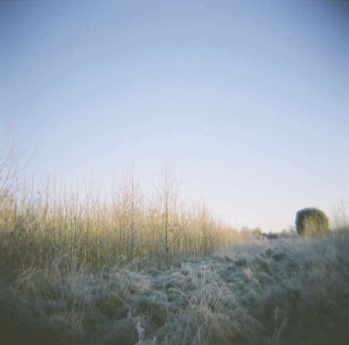 Holga Dawn | City of Blackbirds Photography