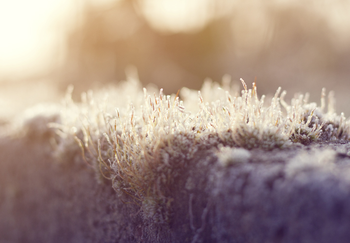 Sparkling Frost | City of Blackbirds Photography