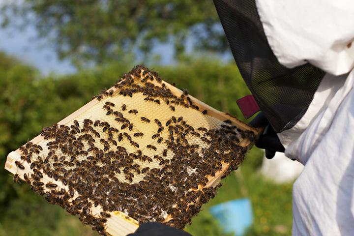 Beekeeping | City of Blackbirds Photography