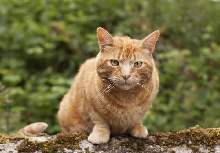 Ginger Cat | City of Blackbirds Photography