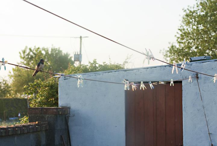 Swallow | City of Blackbirds Photography