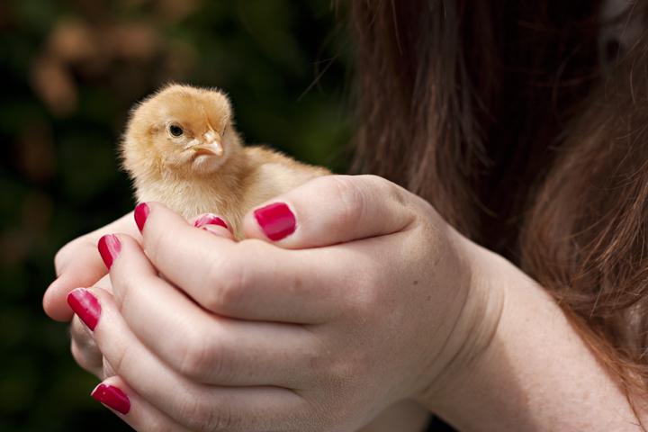 Chick | City of Blackbirds Photography