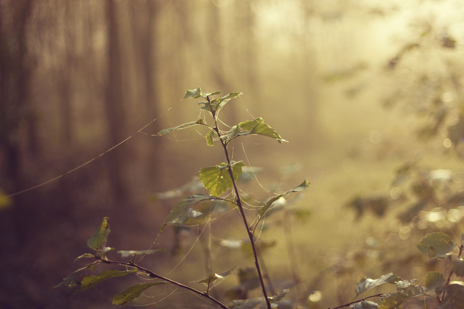 Autumn Light | City of Blackbirds Photography