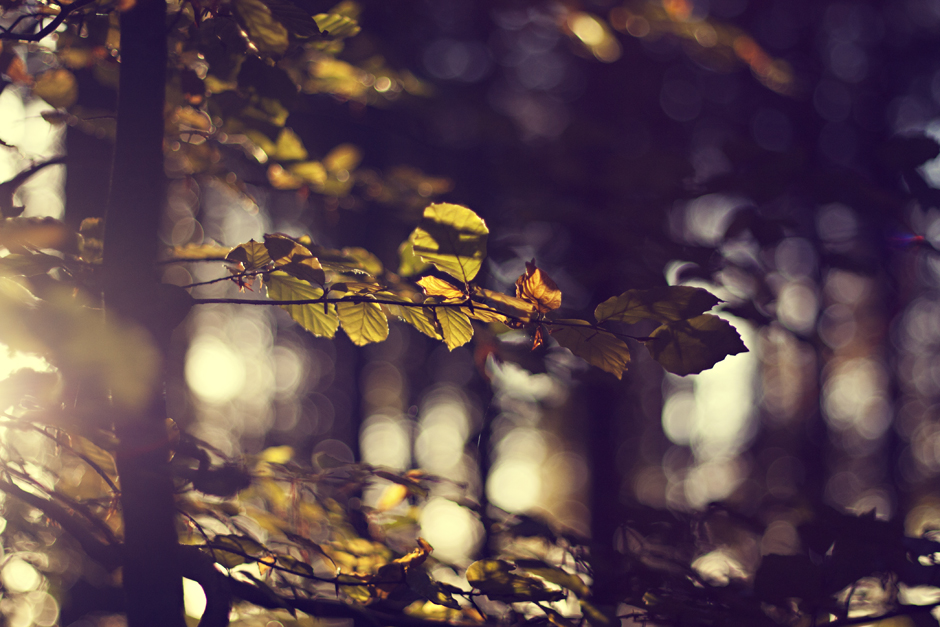 Autumn Leaves | City of Blackbirds Photography