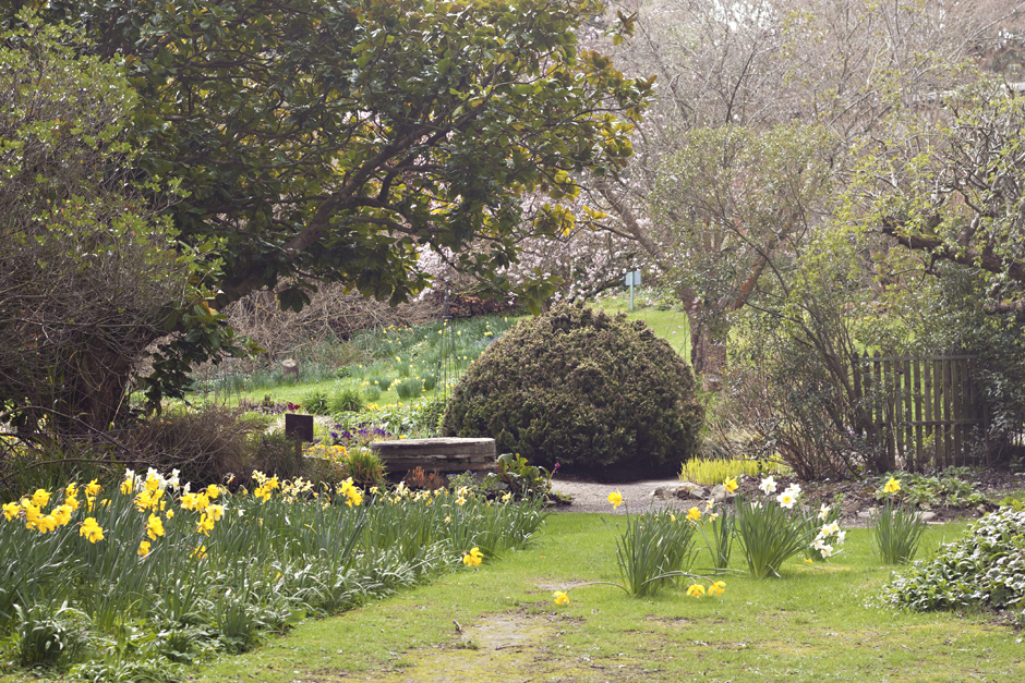 Mount Usher Gardens | Avoca | Ireland | City of Blackbirds Photography