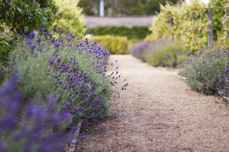 marlay-park-fading-lavender